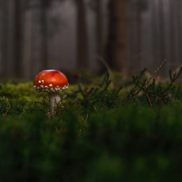 lone mushroom sprouting in green forest
