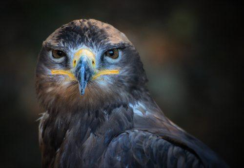 bird staring into camera